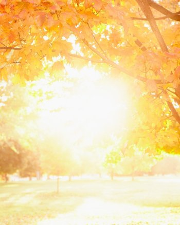 One Last Walk - Fall Leaves Picture with Sunshine