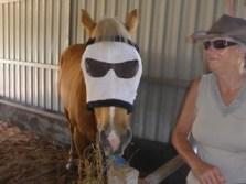 Cool dudes! John Tate's horse, Paddy