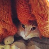 It got colder. Finn was not a fan.
