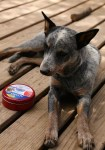 Tips to Keep Your Dogs Safe at Home This Summer