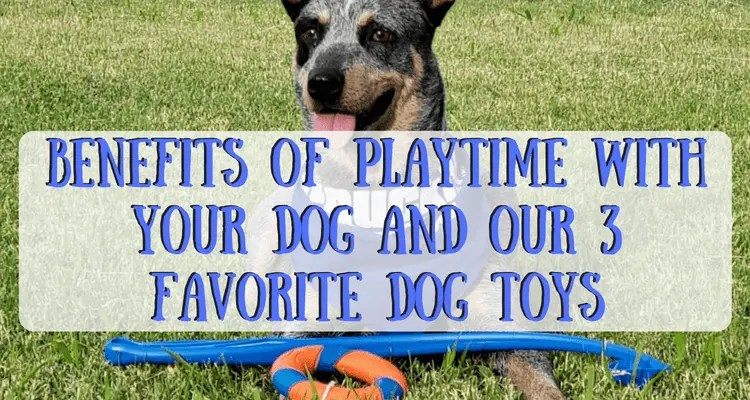 Benefits of Playtime With Your Dog & Our 3 Favorite Dog Toys