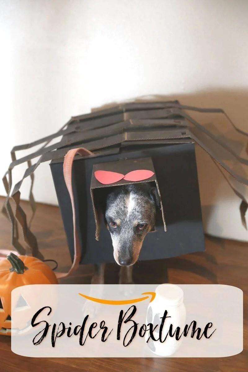 Quick, Affordable Dog Halloween Costume – DIY Box Spider Boxtume