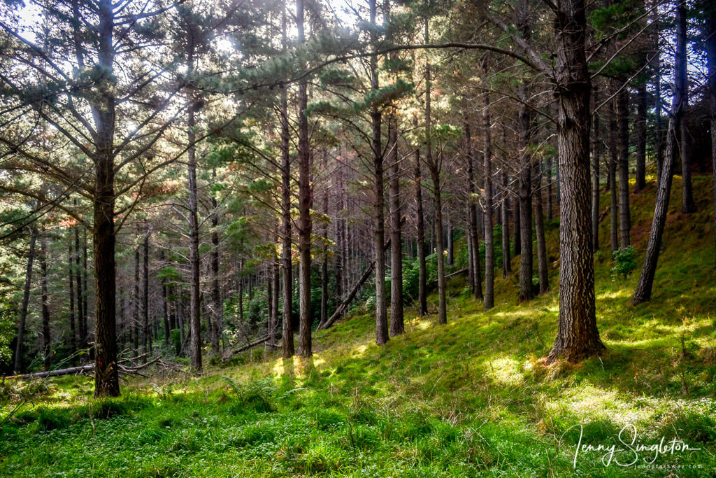 Forest on the Anaura Bay Walkway, East Cape, New Zealand