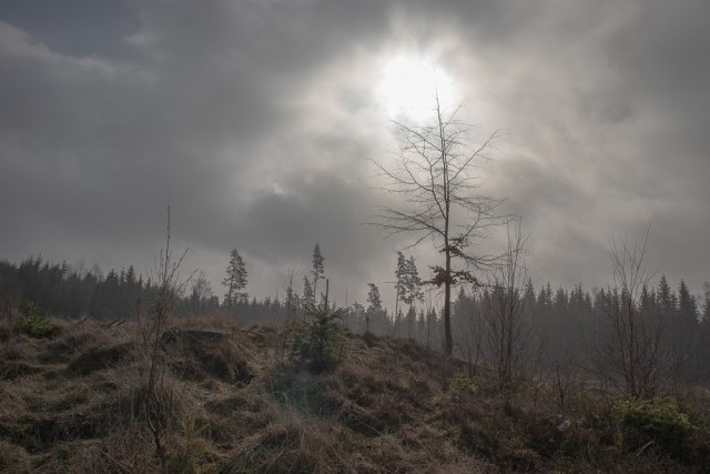 bilder från skogen