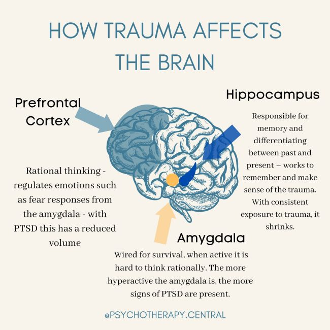 How Trauma Affects the Brain
