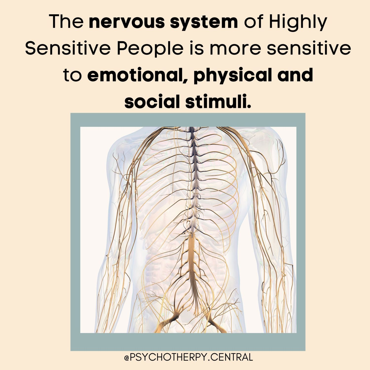 The Nervous System of Highly Sensitive People