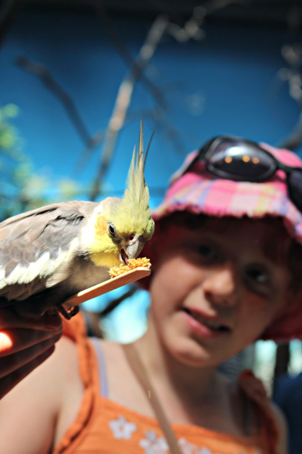 Bird feeding - A visit to the Woodland Park Zoo