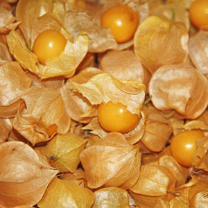 Aunt Molly's Ground Cherry