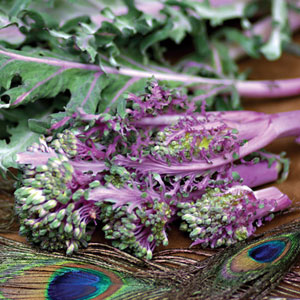 Purple Peacock Broccoli