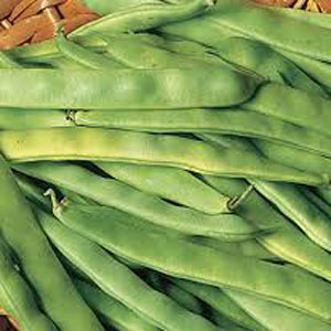 Bush-Bean-Romano