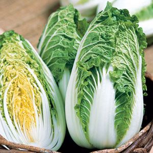 Soloist Chinese Cabbage