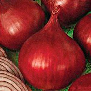 Redwing Onion