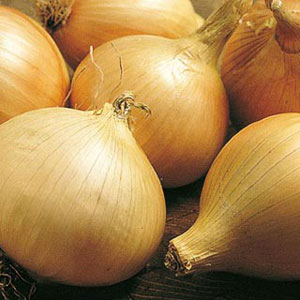Walla Walla Onion