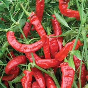 Jimmy Nardellos Pepper
