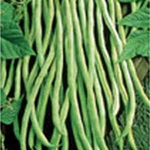 Fortex Pole Bean