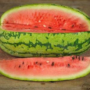 Jubilee Bush Watermelon