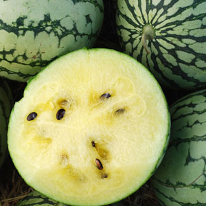 Petite Yellow Watermelon