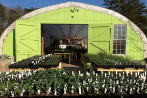Opening Greenhouse Tour