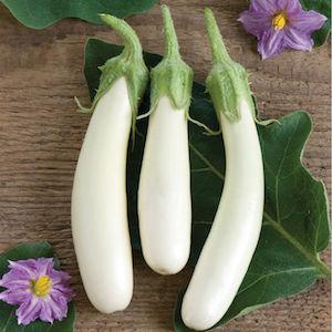 Gretel Eggplant