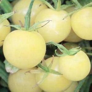 White Cherry Tomato