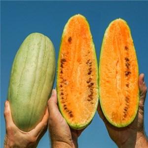 Kaho Watermelon