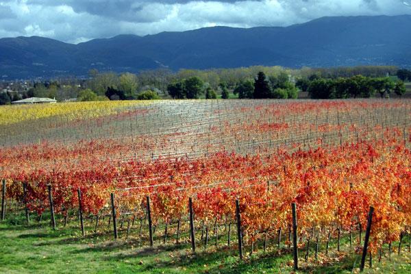 unieke wijnreis Italië - Montefoscoli Arnaldo Caprai
