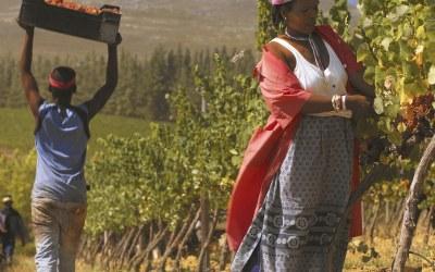 Van flop tot top | Een online wijnproeverij Zuid-Afrika