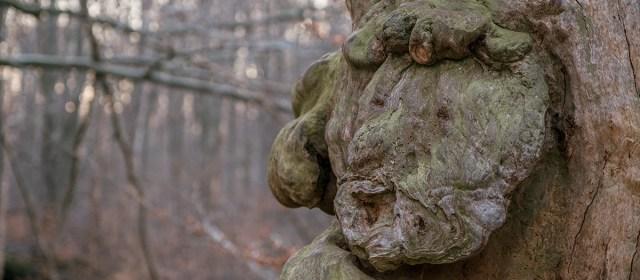 Das Gesicht im Urwald Sababurg