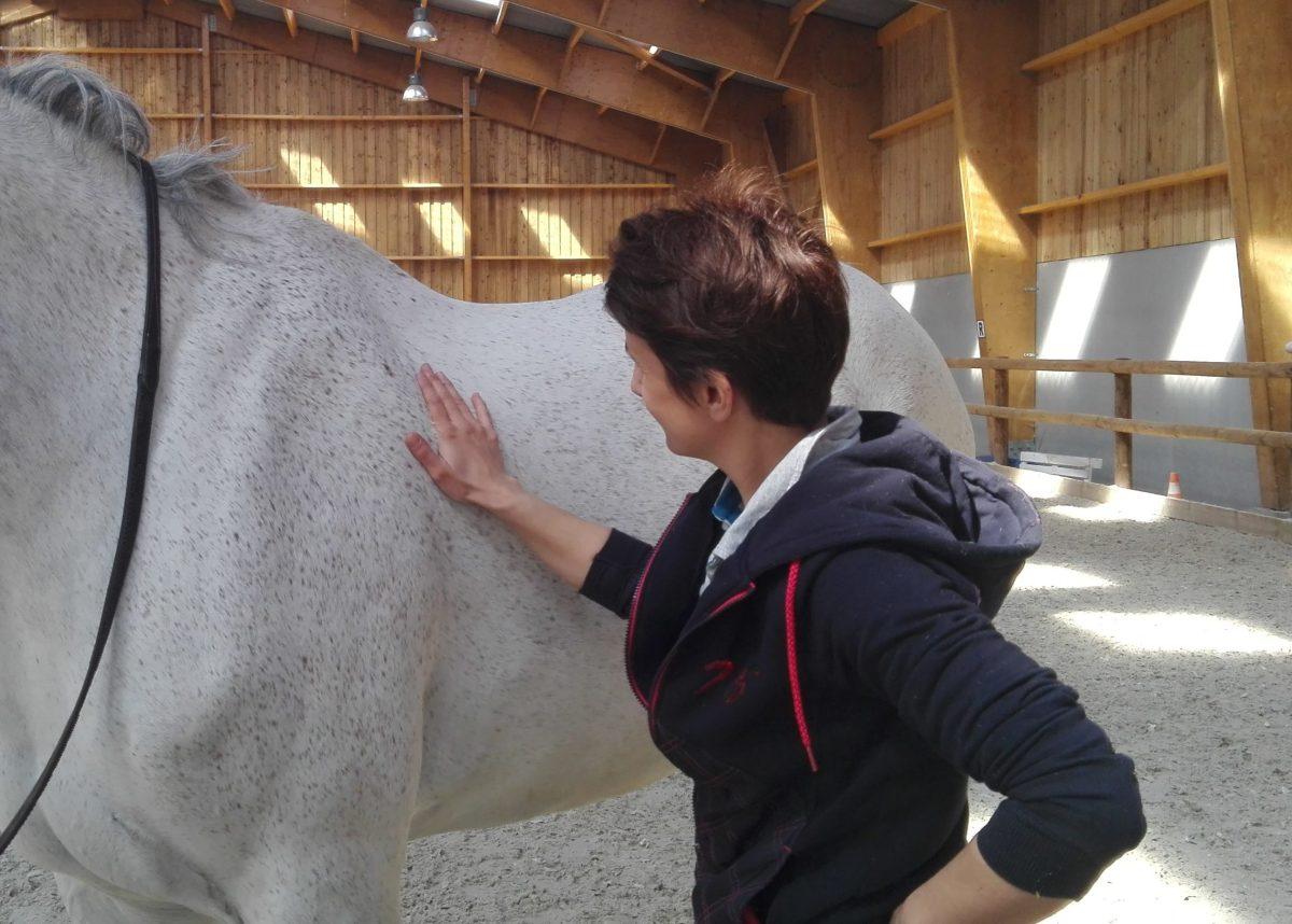 peser poids cheval état corporel graisse épaule