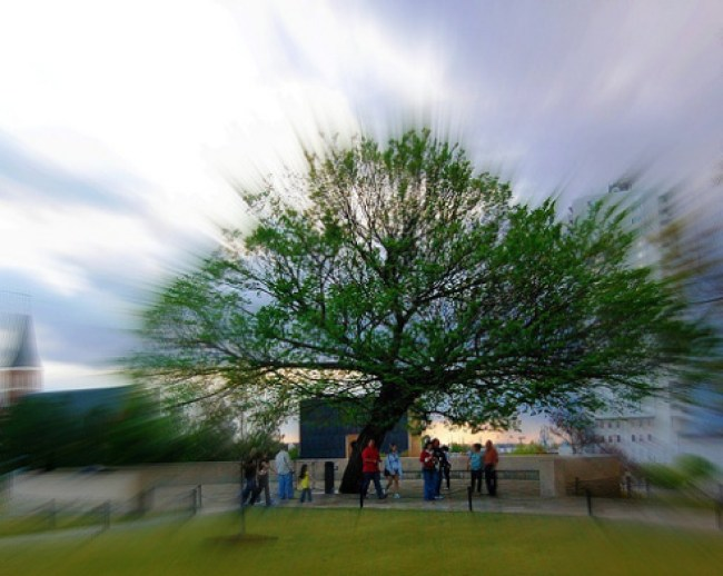 Survivor Tree Oklahoma City Bombing Memorial