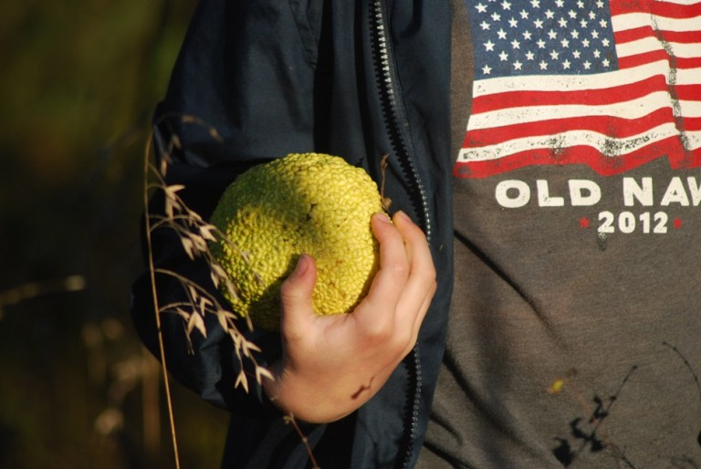 Sullivan holds an Osage orange, also called a Hedge Apple, Monkey Ball and Green Brains!