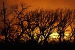 Firy Sunset