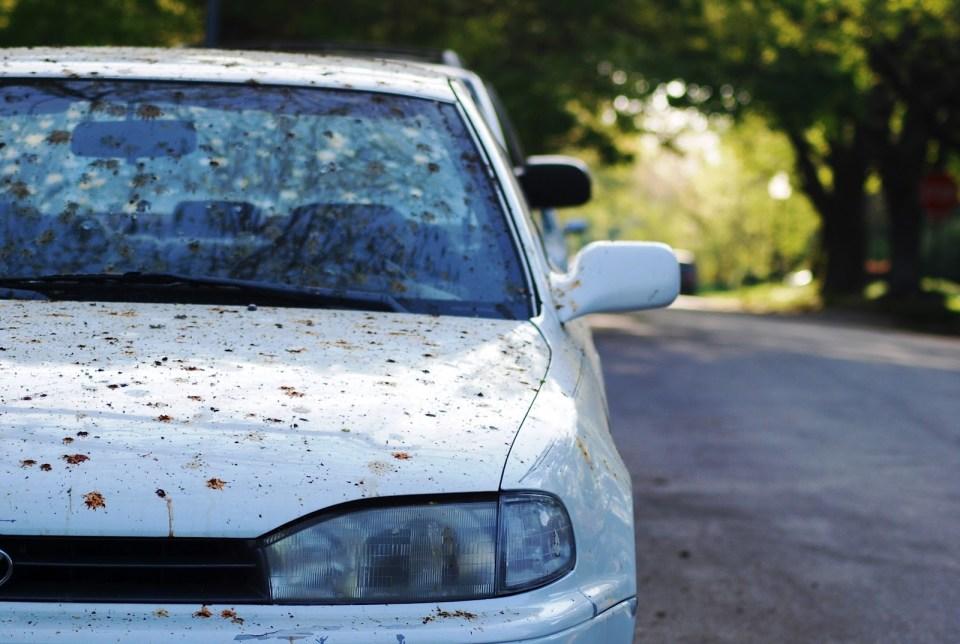 Bird+Poop+on+Car