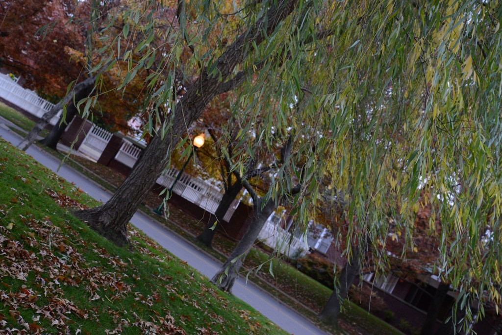 Weeping Willow in Autumn