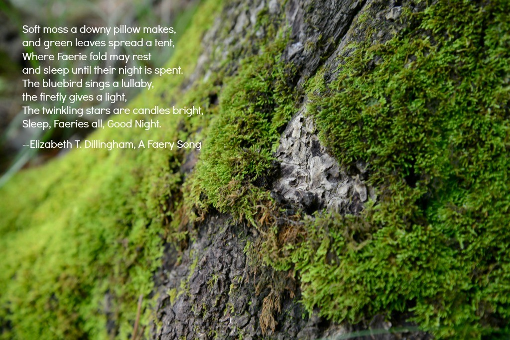 Fairies and Moss and Trees