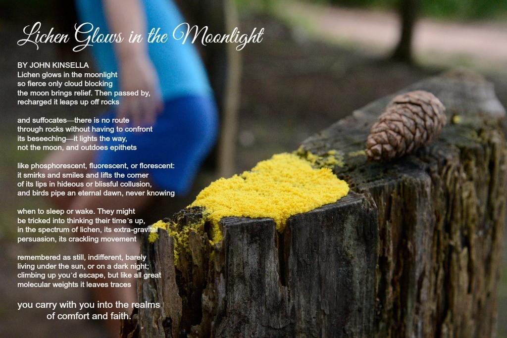 Lichens Yellow in Moonlight