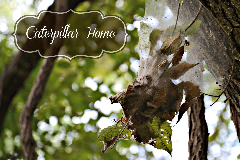 Caterpillar Home