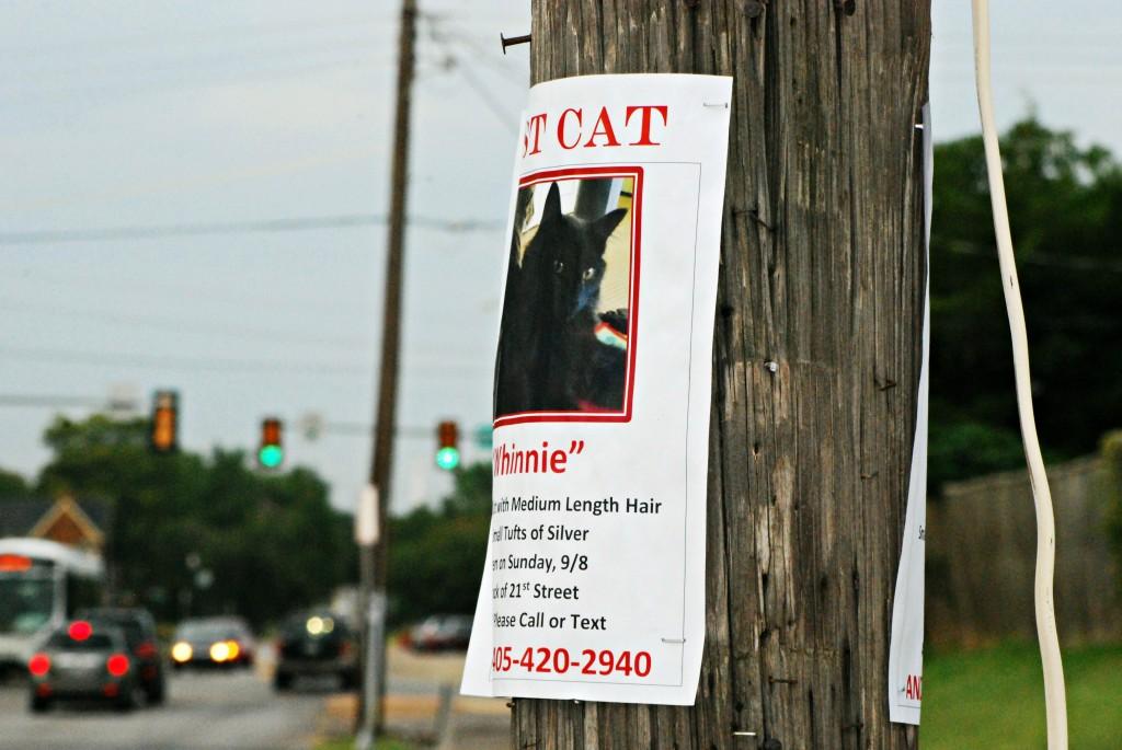 Lost Cat Picture