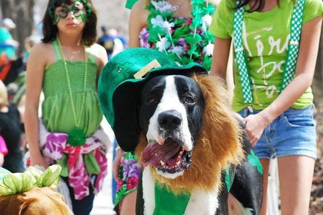 St. Patrick's Day Parade Oklahoma City Dog