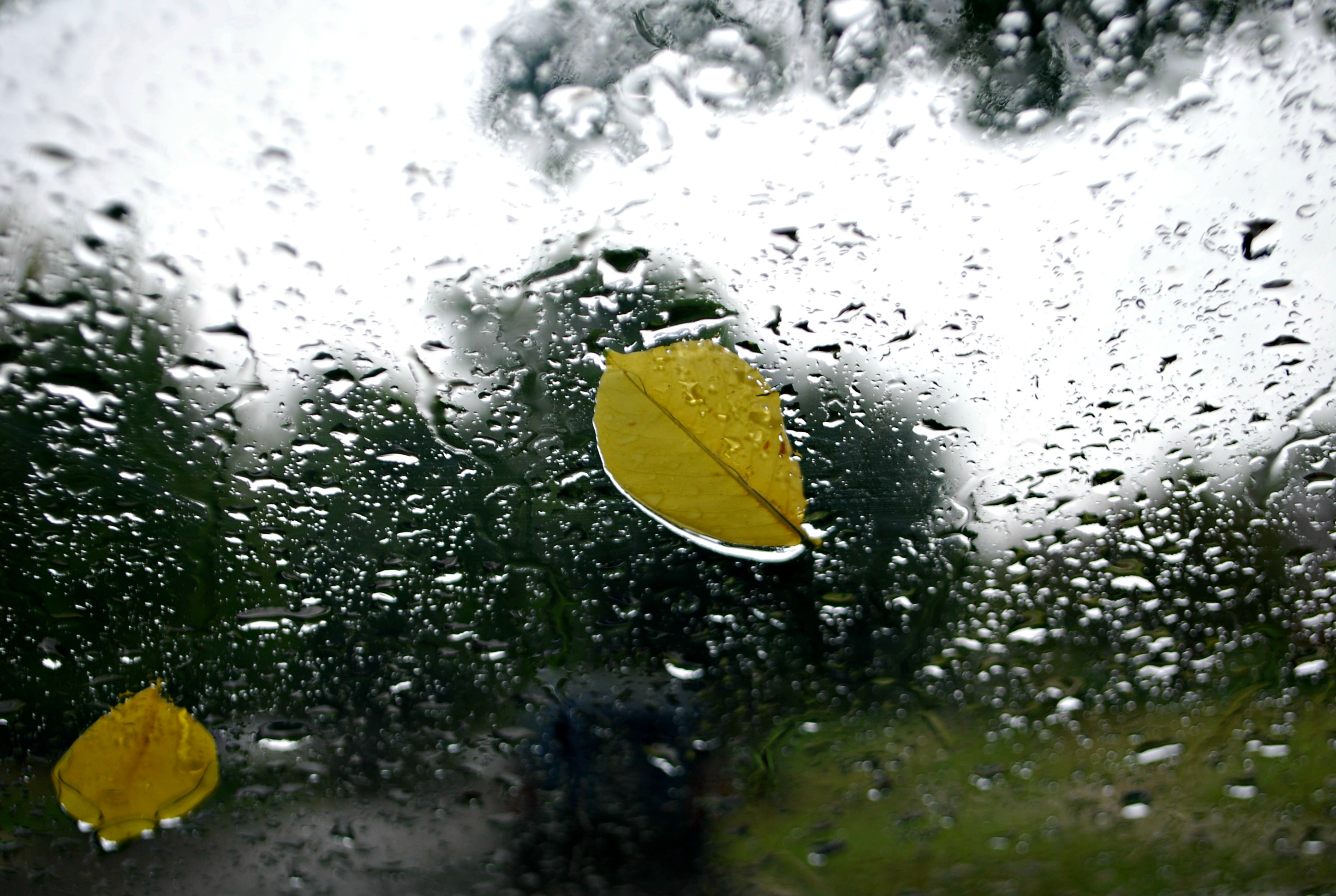 Leaf on Window in the Rain