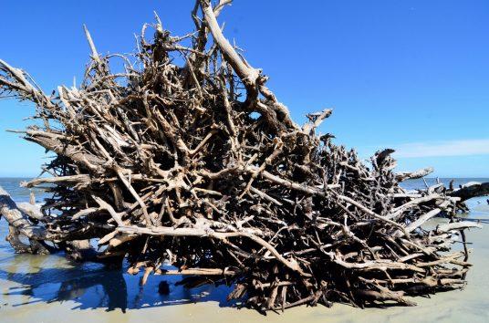 Driftwood Beach at Jekyll Island11