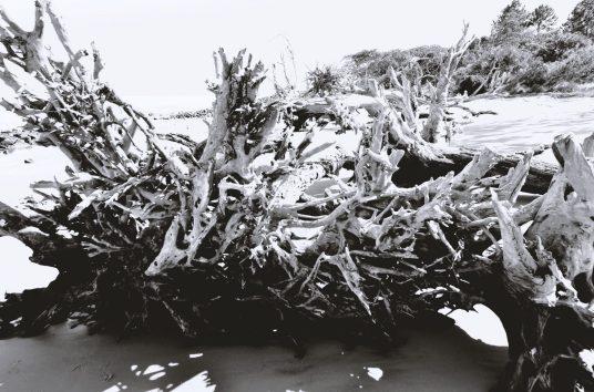 Driftwood Beach at Jekyll Island14