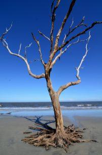 Driftwood Beach at Jekyll Island28