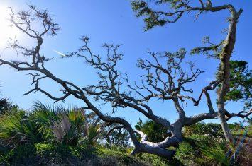Driftwood Beach at Jekyll Island8