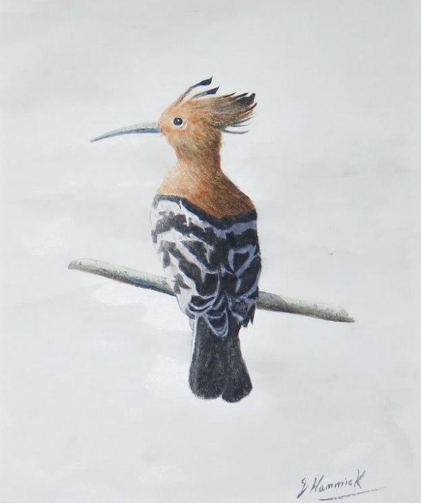 """Hoopoe bird 8""""x12"""" sold"""