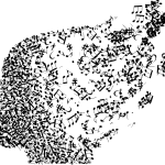 The amygdala in concert consumer behavior