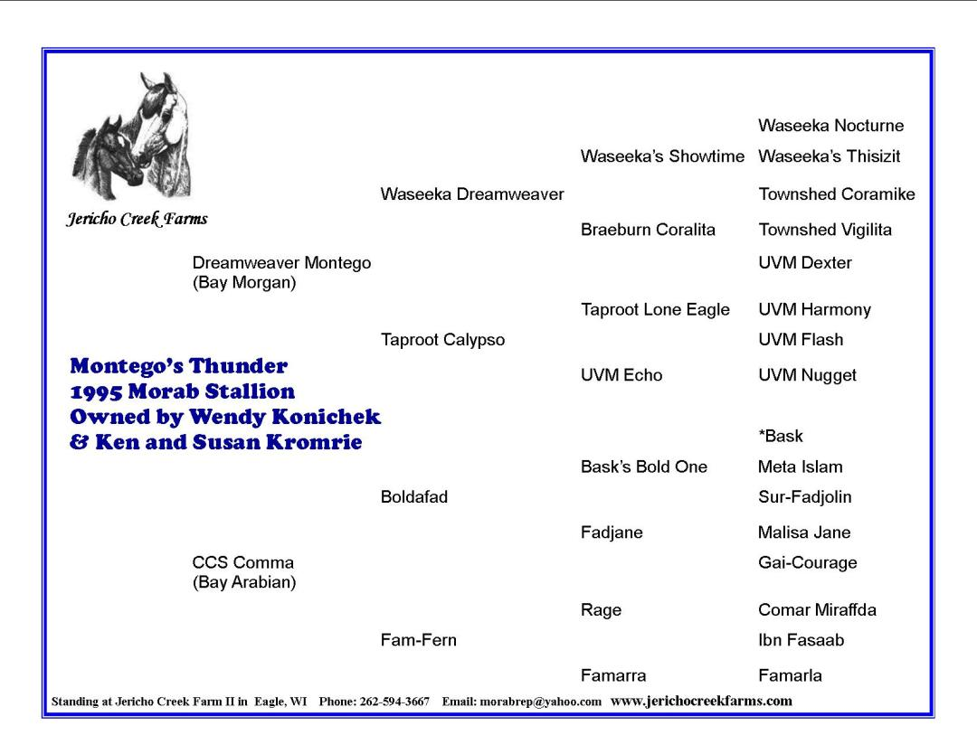 Montego's Thunder stallion pedigree