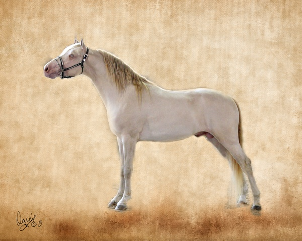 Jericho's White Knight at Halter