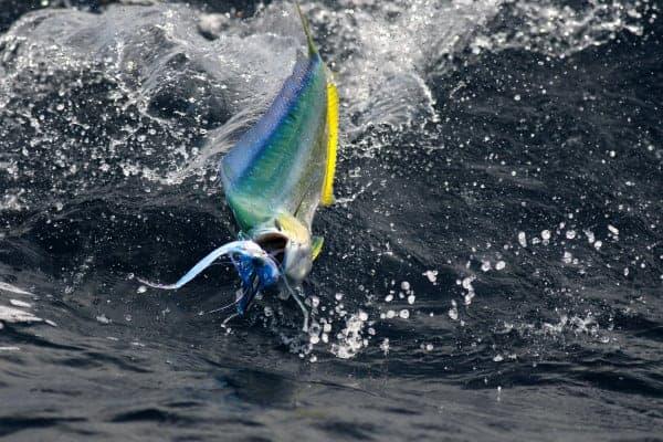 Fishing Ocean City Maryland