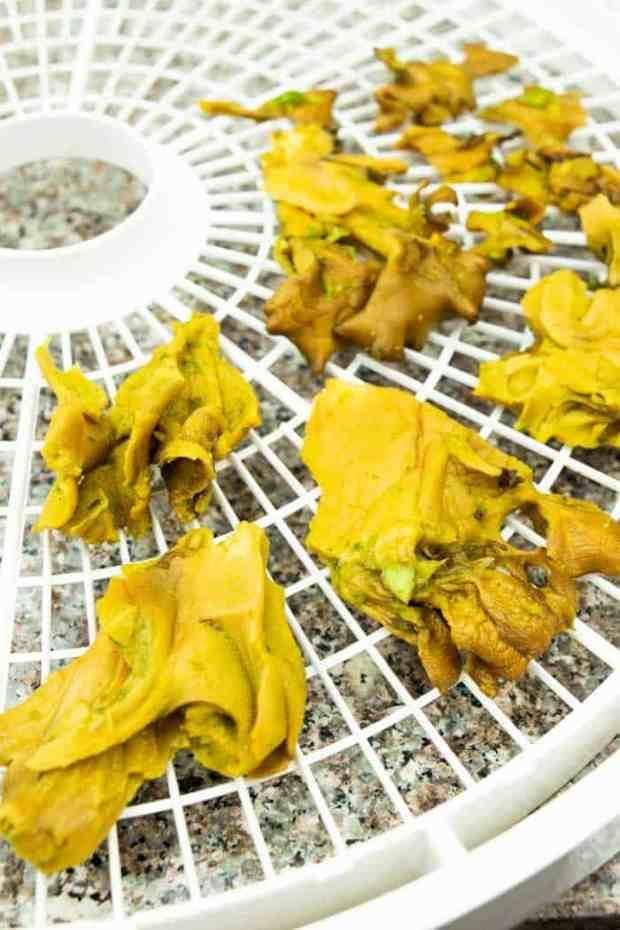 Dried mushroom jerky on dehydrator trays